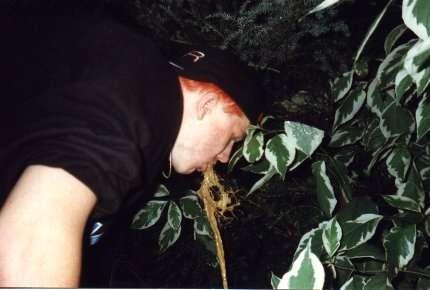 watering the tree... vomit