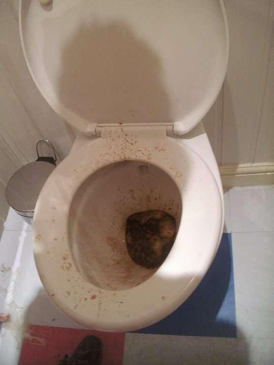 Diarrhoea Sick Vomit Rate My Vomit Vomit Pictures