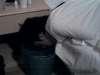 Spagno vomita vomit