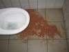 Irish pub vomit