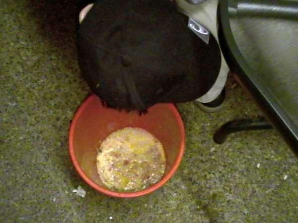 Bucket Chunder vomit