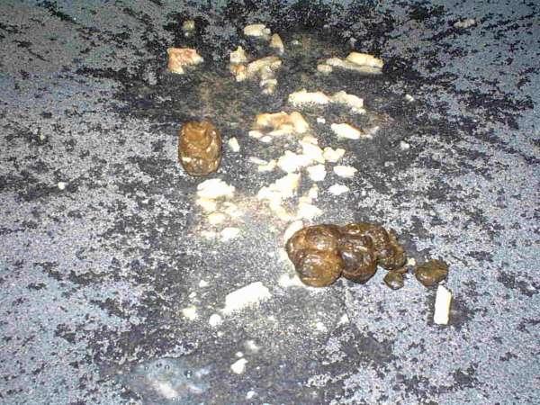 My puke\Jews dump vomit